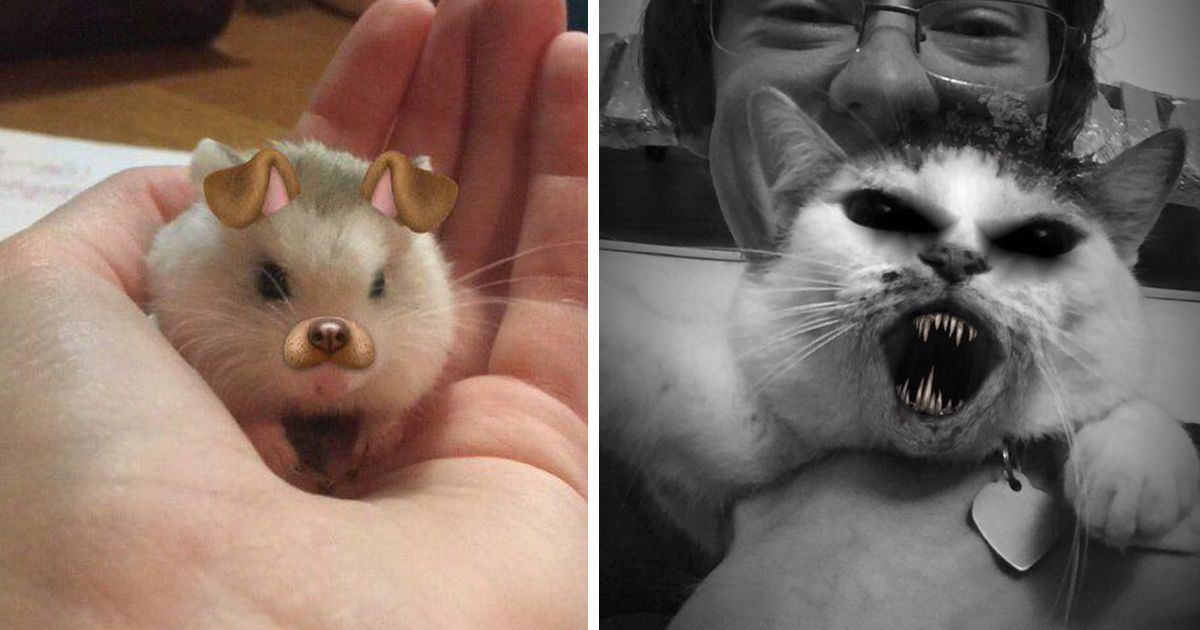 People Are Using Snapchat Filters Their Animals And The Results Are Funny