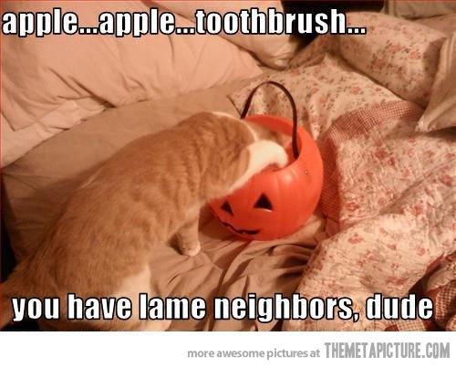 funny cat Halloween pumpkin