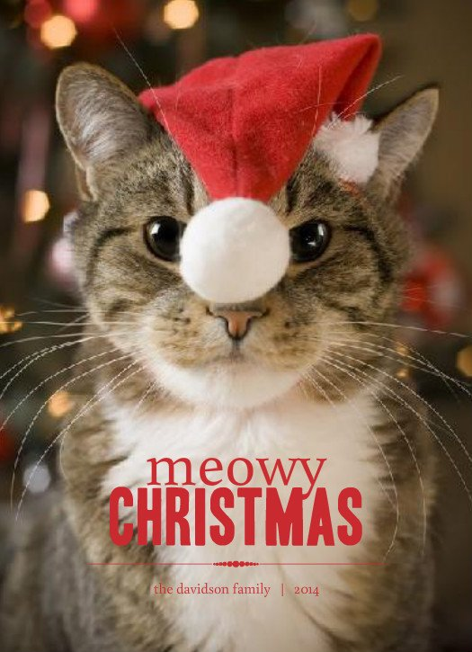 Funny Cat Family Christmas Cards 18