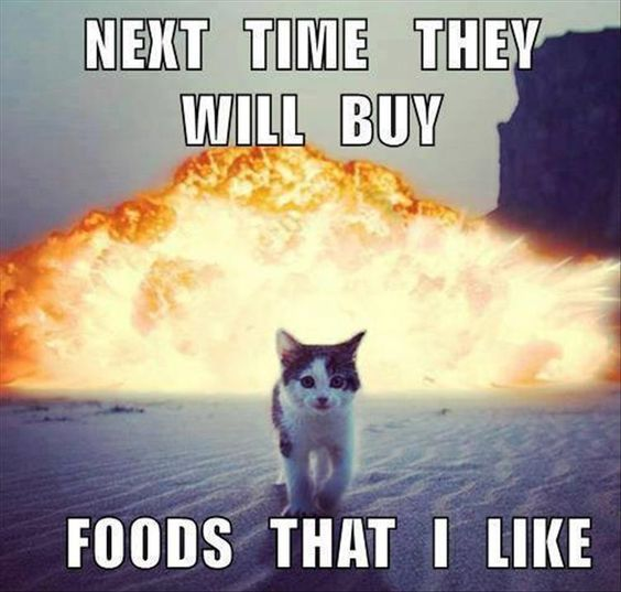 Top 25 Funny Cat Memes cats memes