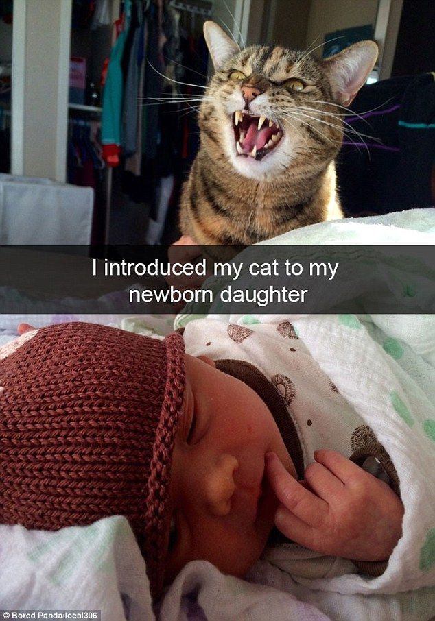 Wel e to the family An owner s newborn s a slightly disturbing reaction from the cat