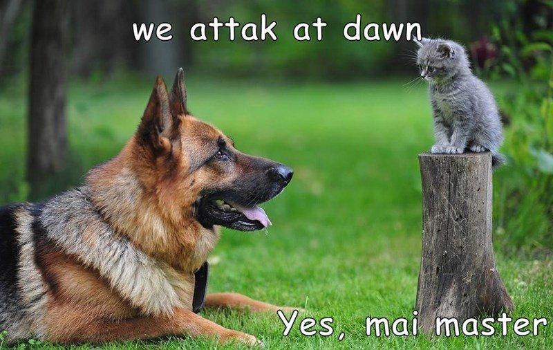 cat dogs master dawn caption