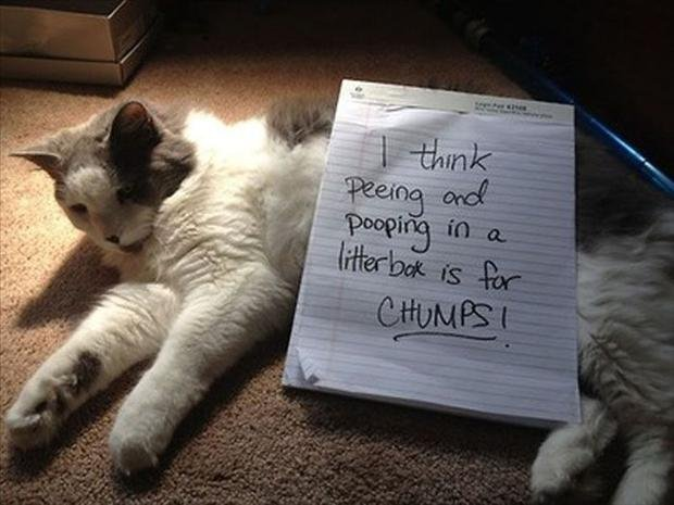 funny cat shaming dumpaday 13