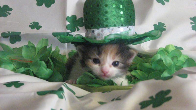 20 Dogs & Cats Who Are Ready For St Patrick s Day