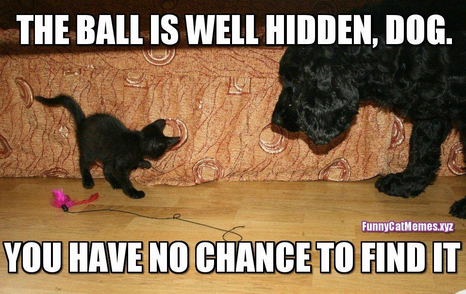 75 Hilarious Grumpy Cat Memes Best Cat Memes Love Memes