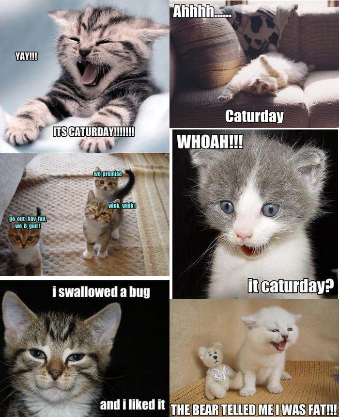 HA Funny Cat Memes Funny