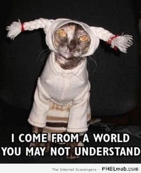 Watch the Prodigious Funny Cat Costume Memes