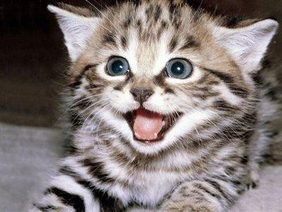 funny cat desktop wallpaper screensaver puter