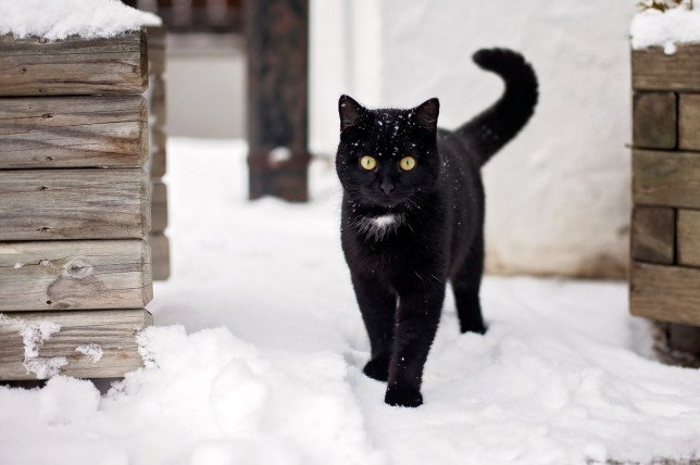 Essential tips to keep cats safe in the snow