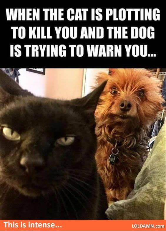 funny cat dog pics plotting warning