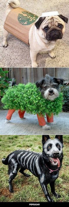 Get your fur child ready for Halloween with 15 of the Best DIY Halloween Dog Costumes