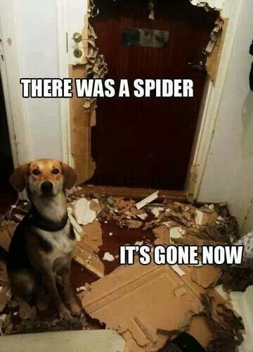 There was a spider… it s gone now… thank goodness We hate spiders