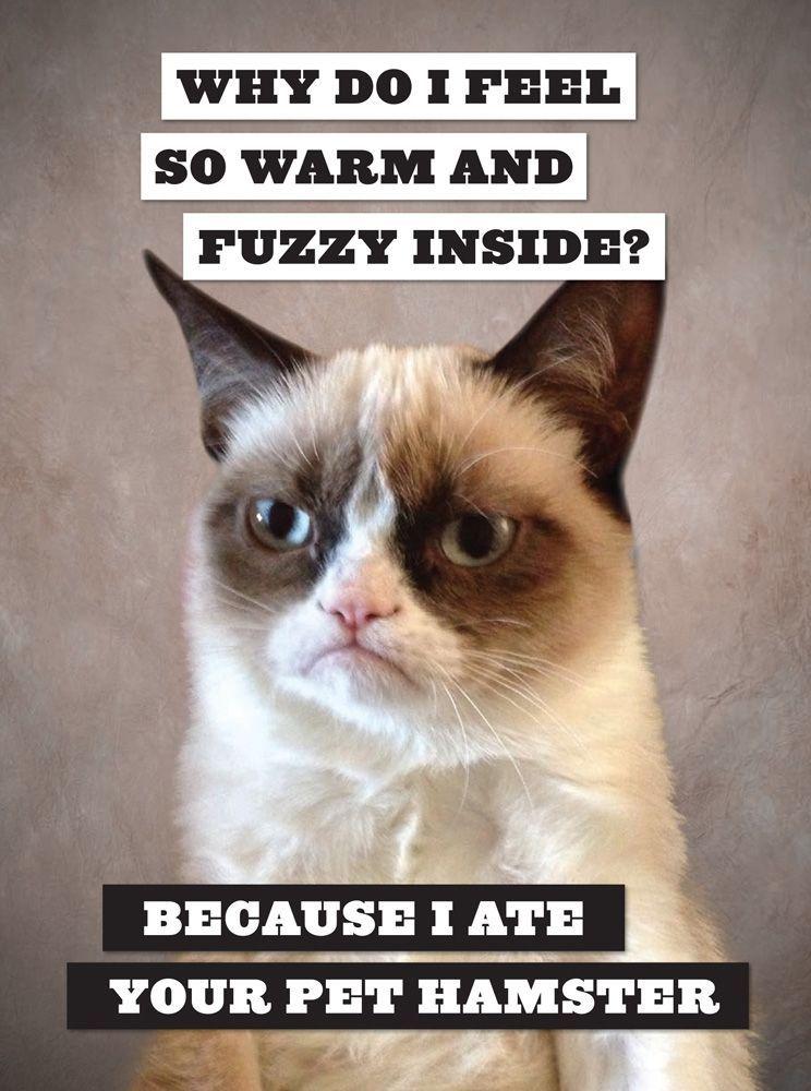 5 Hilarious Grumpy Cat