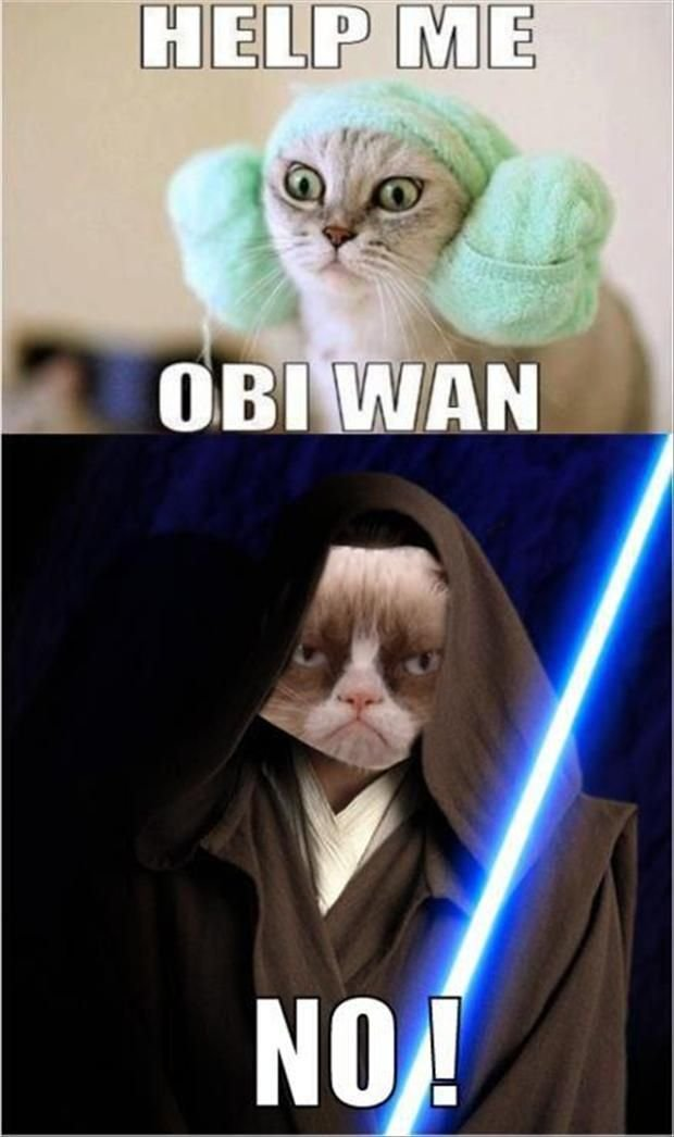 grumpy cat star wars help me obi wan no