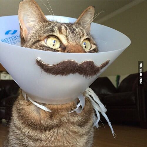 A sick cat is not funny let s add a mustache