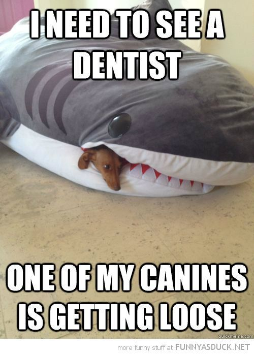 hahaha dental humor only a hygienist would giggle at