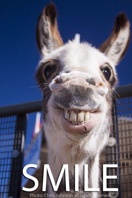 MY FUNNY DONKEY PHOTO SMILE