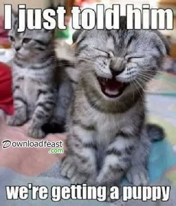 Watch the Shocking Funny Cat Workout Memes