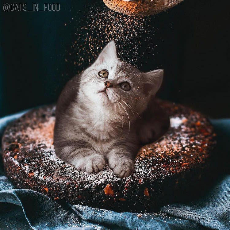 Funny Cat s Cats in Food by Ksenia