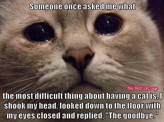 Cat Memes Hilarious Funny This is still HARD I miss my kitties so MUCH Cute