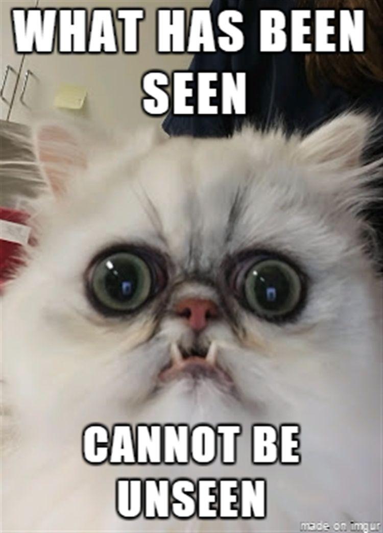 Funny Animal The Day – 23 Pics Funny Animal Memes Animal Humor