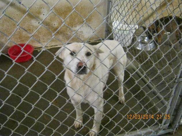 12 4 14 Will at Mason Cty Animal Shelter WV Needs Adopter