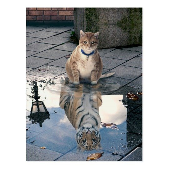 Cat reflection fat cat cat memes cute cats postcard