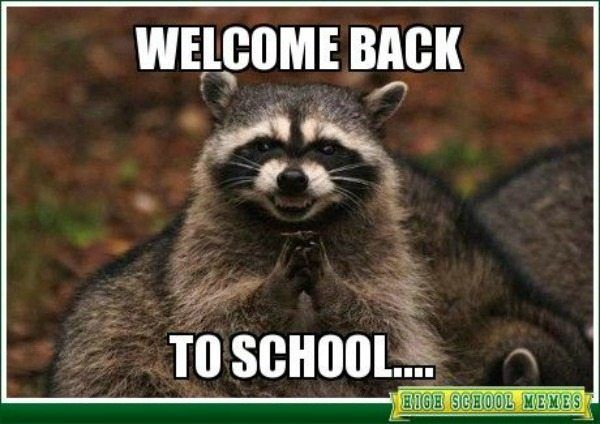 Because this evil raccoon has to make you laugh just a little bit Teacher Meme Raccoon