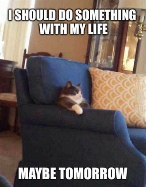 First day off after seven 12 hour shifts Funny Picture Quotes Hilarious Funny