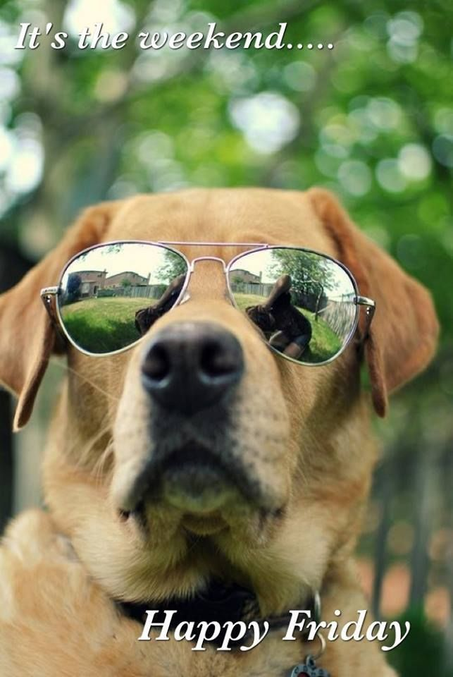 Watch the Stunning Funny Pictures Dog with Glasses