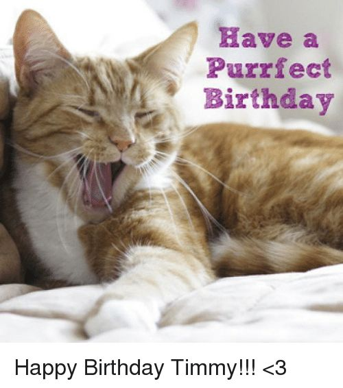 Birthday Memes and Happy Birthday Have a Purrfect Birthday Happy Birthday Timmy