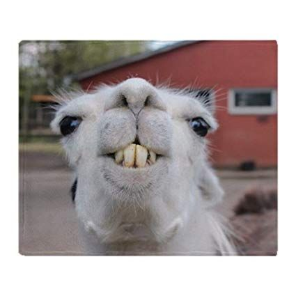 "CafePress Funny Alpaca Llama Soft Fleece Throw Blanket 50""x60"""
