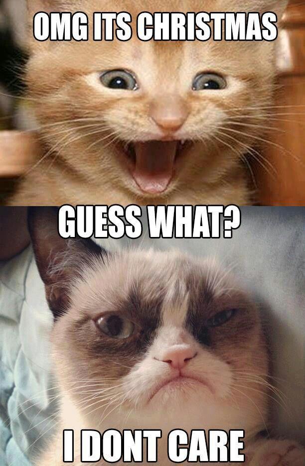 Ohhhh grumpy cat Humor that I love Pinterest