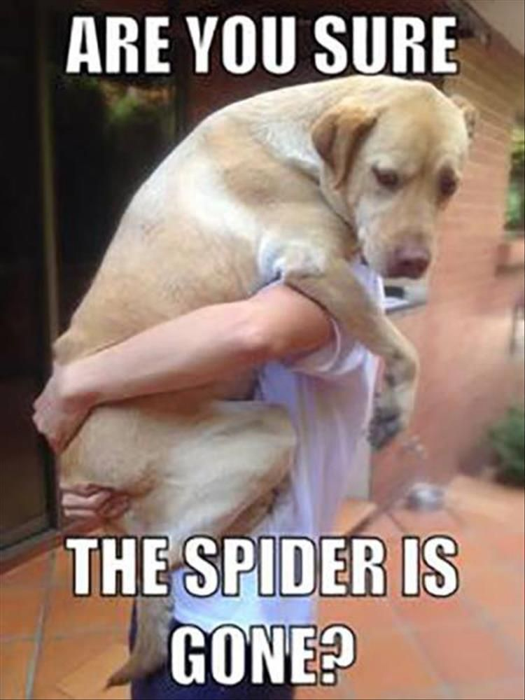 Funny Animal The Day 24 Pics