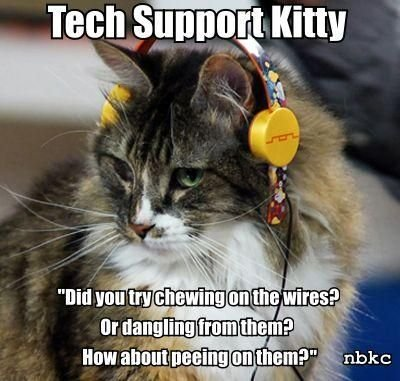 Tech Support Kitty might want to find a different industry… call9