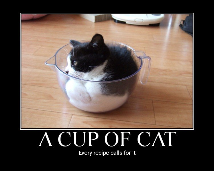 Funny cat pictures what s for dinner