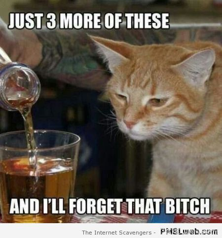 Drunken cat meme at PMSLweb