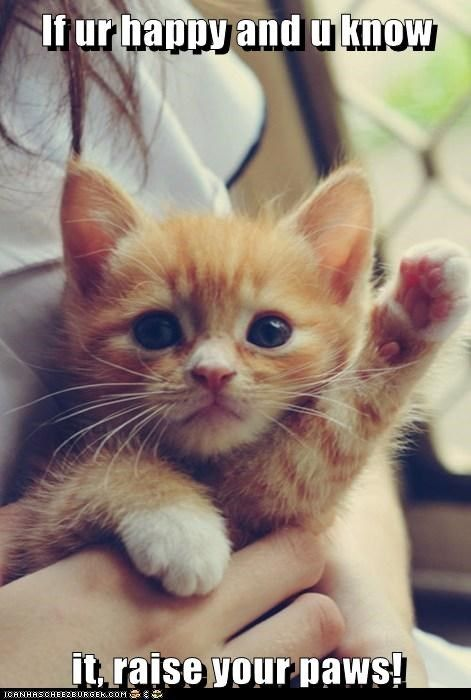 kitten happy Cats