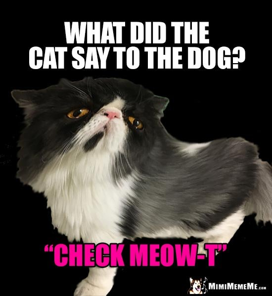 "Cat Joke What did the cat say to the dog ""Check Meow"