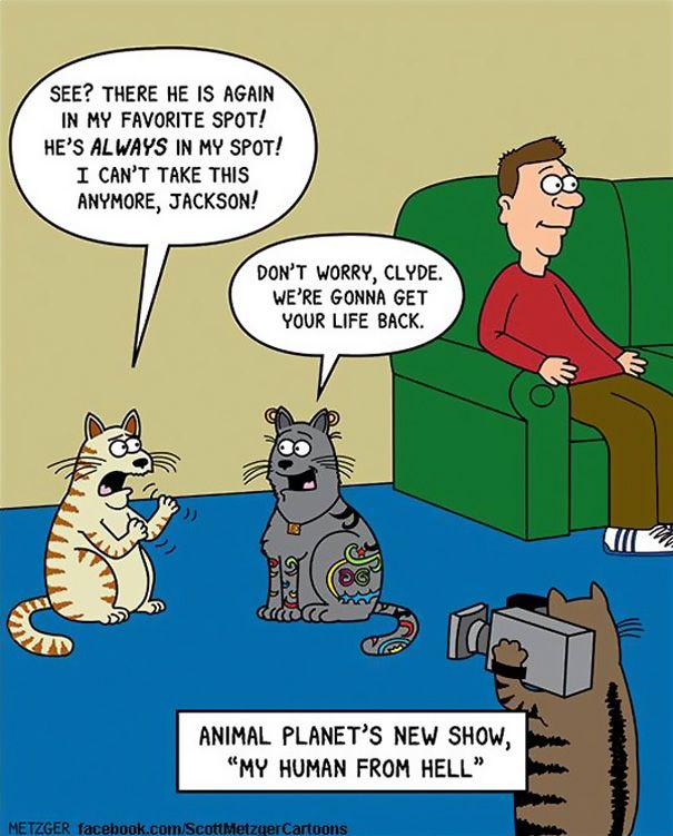 Cat ics