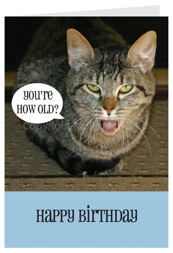 Happy Birthday Card Cat