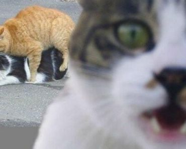 Watch the Suprising Funny Cat Profile Pictures