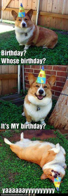 corgi funny dog cute hilarious