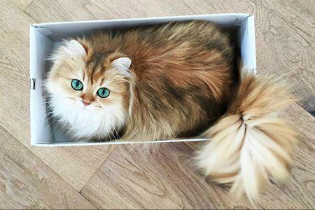cutest cats on the internet 4 57eeab3c5f9b586c3549f9c2