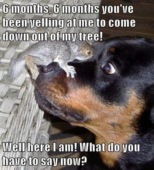 Bark is worse than bite Funny Squirrel Squirrel Memes Funny Dogs