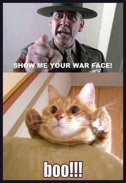 Show Me Your War Face Show Me Your War Face Funny Cat