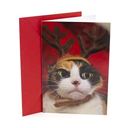 Hallmark Shoebox Funny Christmas Card Angry Cat