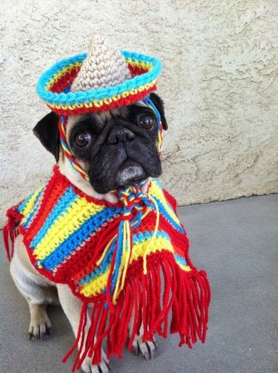 Pugs Cinco De Mayo Poncho Sombrero For Dogs Pet Clothing Dog Clothing Pet Pug Clothing Clothing for Pugs Pug Life Dog costumes