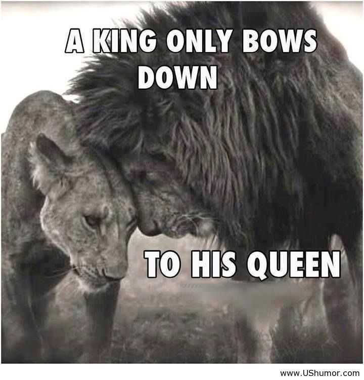 Funny Quotes USHumor Lion Couple Cat Couple Lions In Love