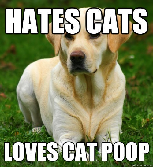Hates cats Loves cat poop